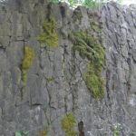teren-vyuka-6tr-03